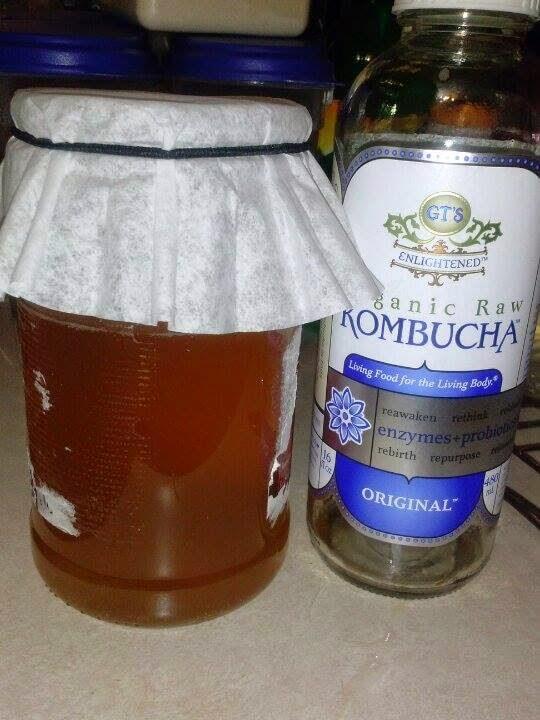 Starting Kombucha Tea from Store Bought